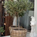 Övervintra dina växter i uterummet