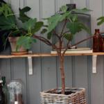 Växter i uterum