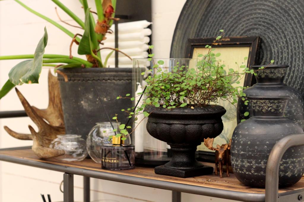 Krukväxterna hemma hos dig – så viktiga är de!