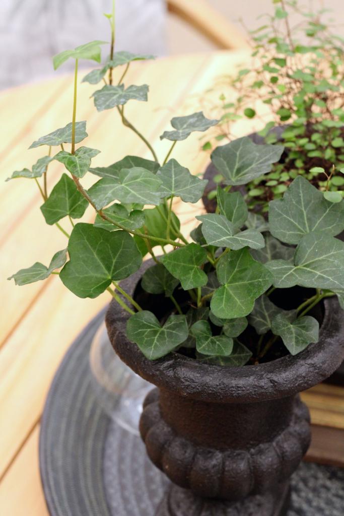 växterna renar vår luft