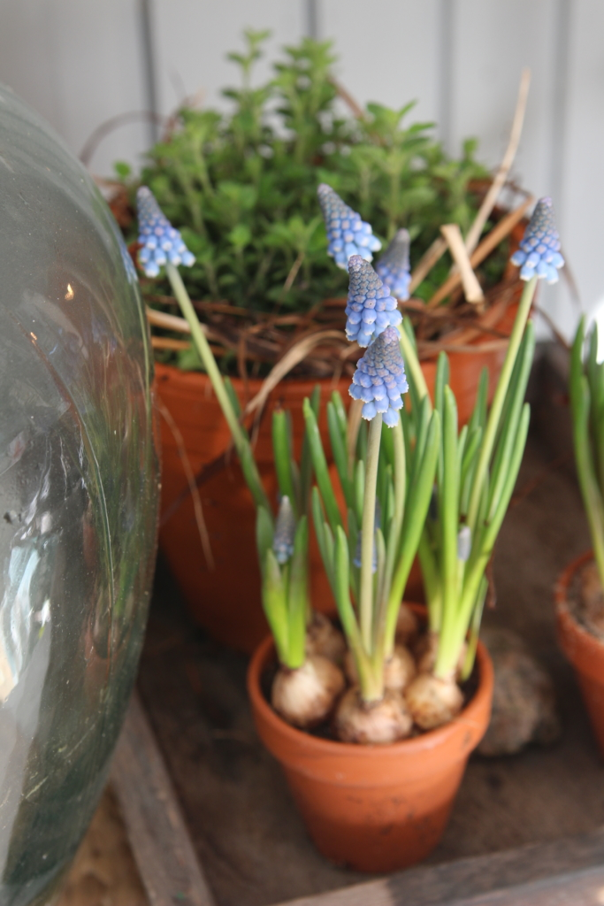 3 växter som passar i uterummet under vårvintern.
