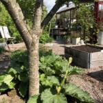 Tips till dig med blåsig trädgård!