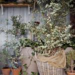 Dina övervintrande växter – hur mår dem?