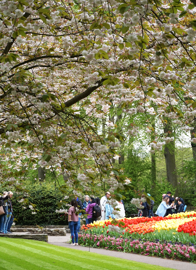 tulpanerna i Amsterdam