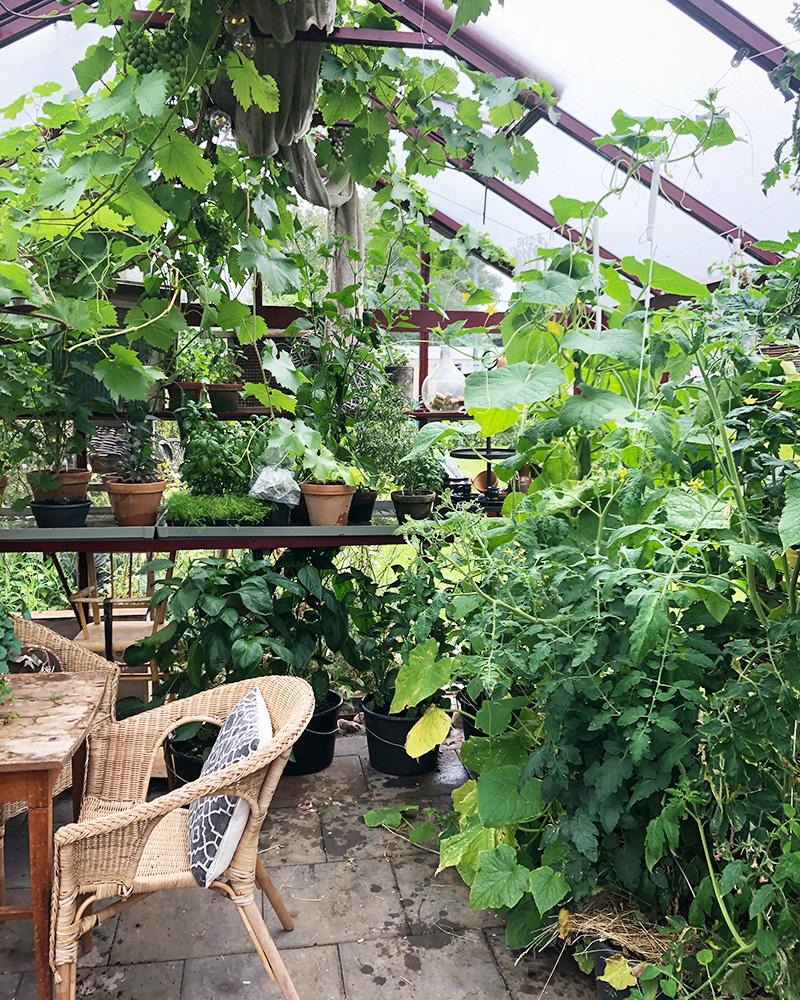 En titt i mitt växthus